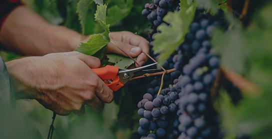 Toulouse Welcome - Visuel Présentation Wine Tour Fronton